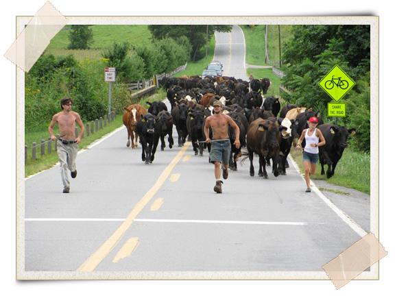 Cow Run