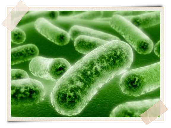 essay on microorganisms an essay on the role of microorganisms in nature