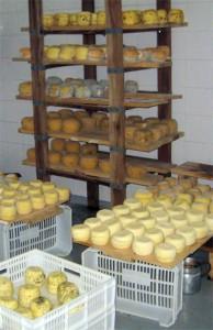 Granja Las Ondinas_dairy