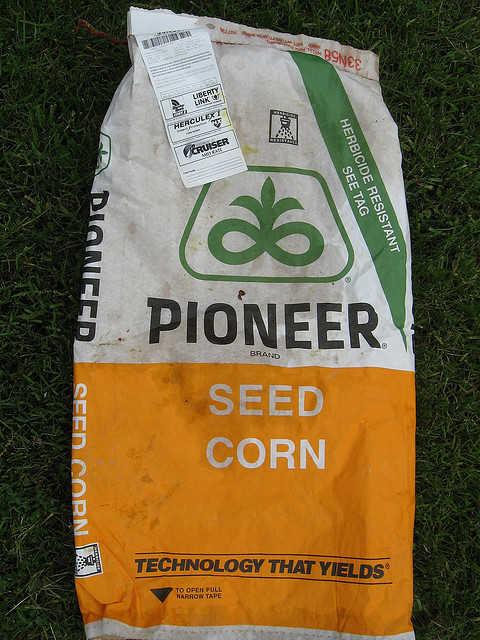 GMO Seed Corn