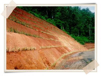 Vetiver Erosion Prevention