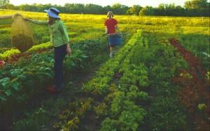 Harvesting on the Farm