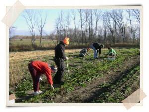 Planting at Camphill Village Farm