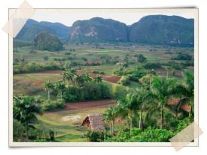 Cuban Farm Landscape