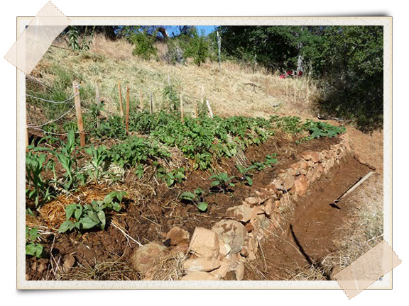 Hugelkultur: The Composting Raised Beds