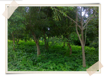 Agroforestry: The Art of Farming With Trees
