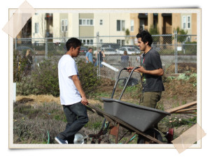 Homeless Garden Project: Cultivating Community Through Urban Farming