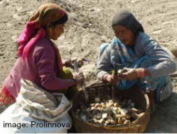Drying Potato Seeds