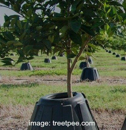 Tree-t-pee