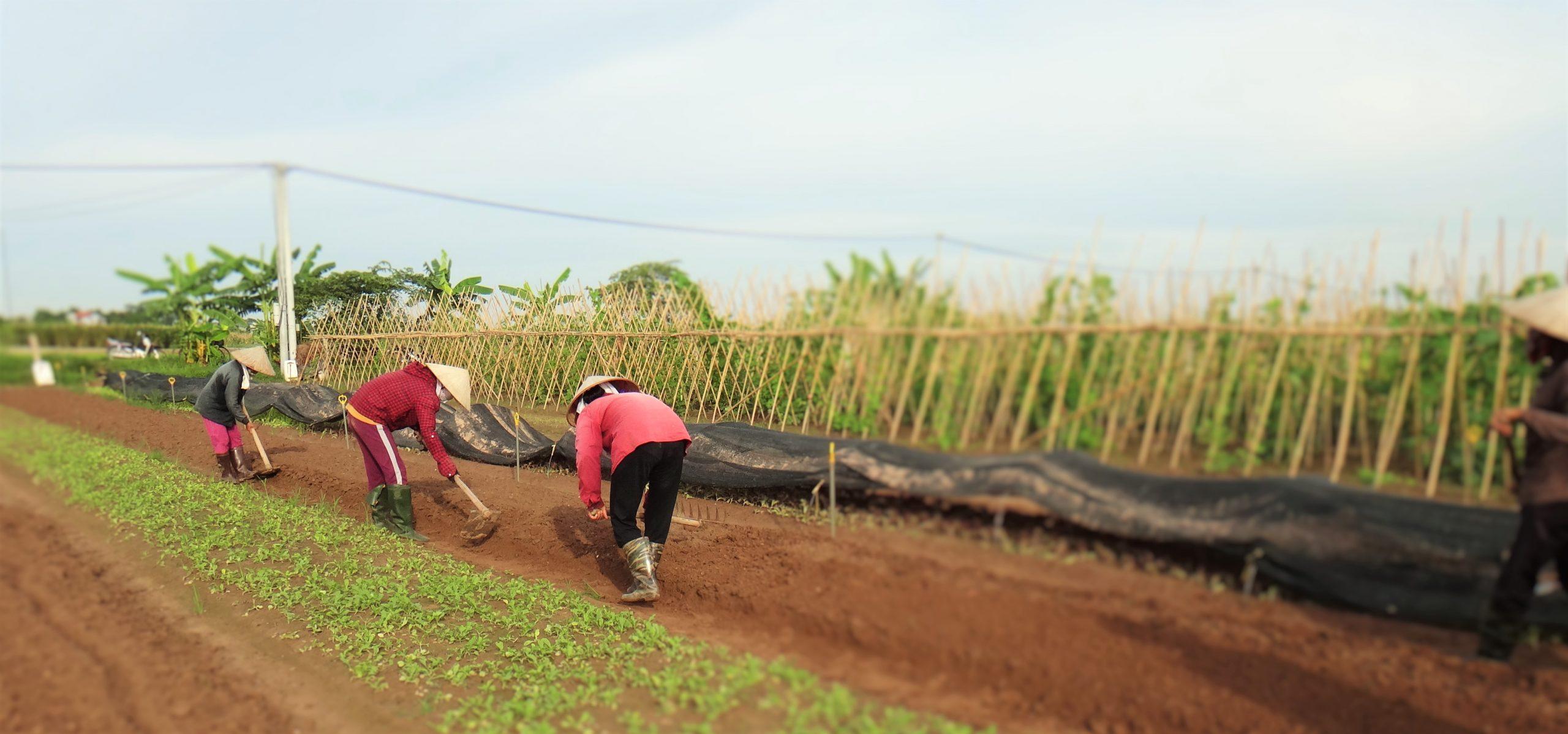 Biochar Bokashi Compost