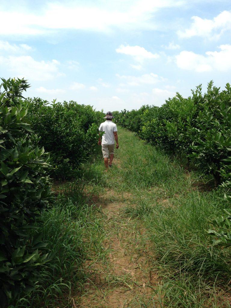 Soybean Fertilizer Orchard