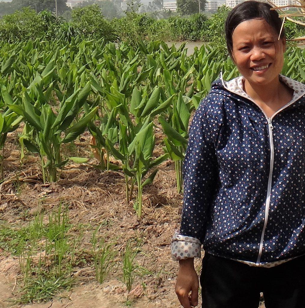 Ms Thu_Traditional Turmeric Farming
