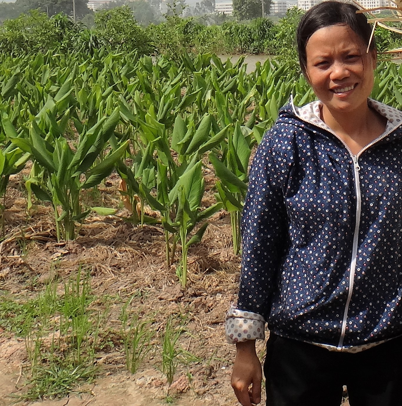 Ms Thu_Traditional Turmeric Farming