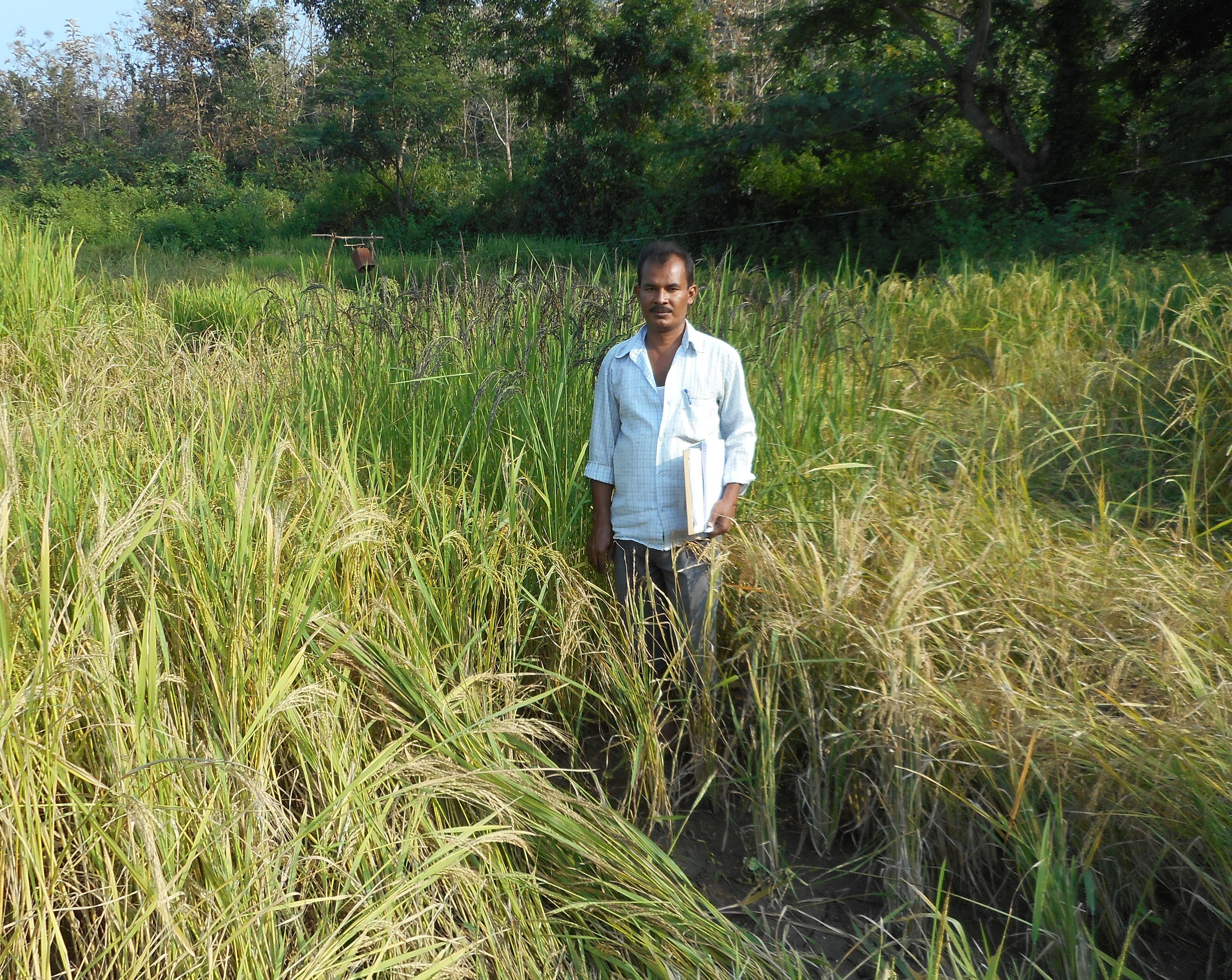 Debdulal Bhattacharya New Landrace
