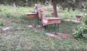 Kikandwa beekeeping operation